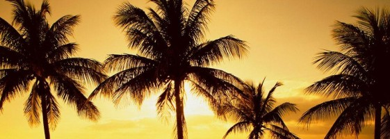 1177856167_1024x768_coconut-palm-in-sunrise-of-key-biscayne-near-miami-florida