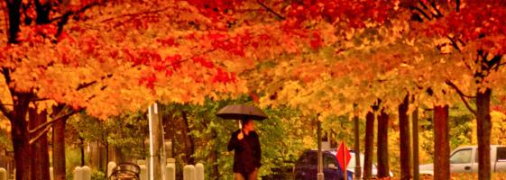 Jengi Beats - Autumn